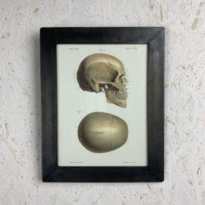 Cadre photo Anatomie LMF Crâne profile